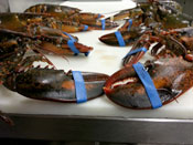 Live Main Lobsters at Overland Meat & Seafood Co. Lake Tahoe