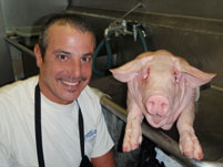 Whole Pigs available to order through Overland Meat & Seafood Co. Lake Tahoe